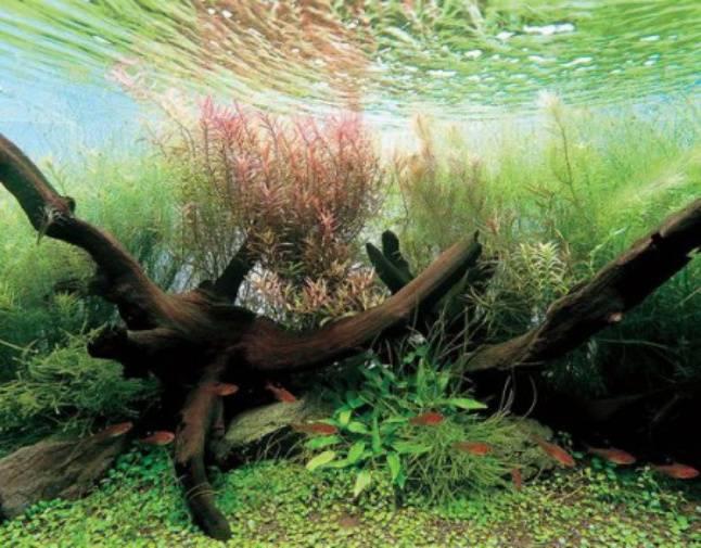 Декарации и дизайн для аквариума