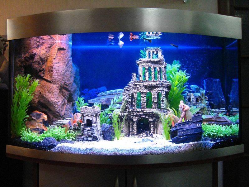 Оформление аквариума в Брянске